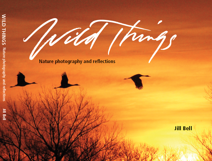 Dust jacket for Wild Things